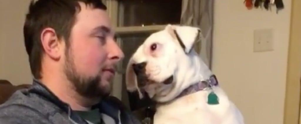 TikTok's Clingy Pet Challenge Funny Videos