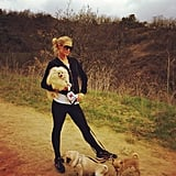 Paris Hilton went for a hike with her dogs. Source: Twitter user ParisHilton