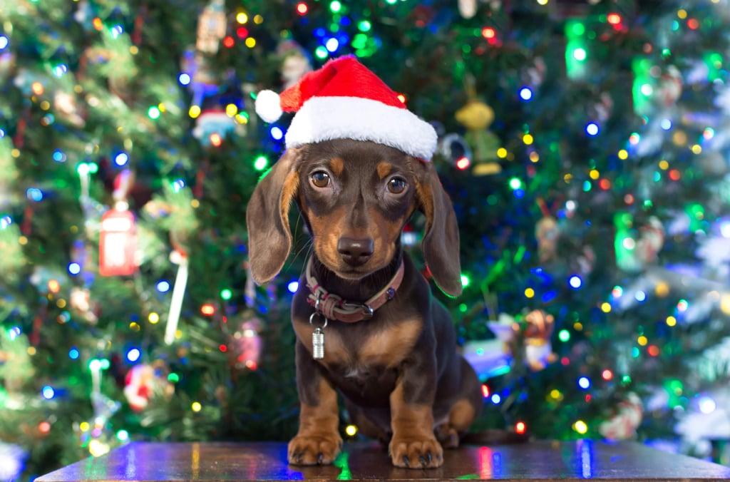 Adorable Dog Christmas Ornaments to Buy