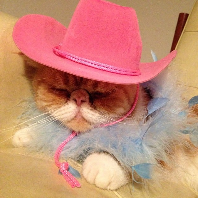 The wild West was too wild . . . must sleep now