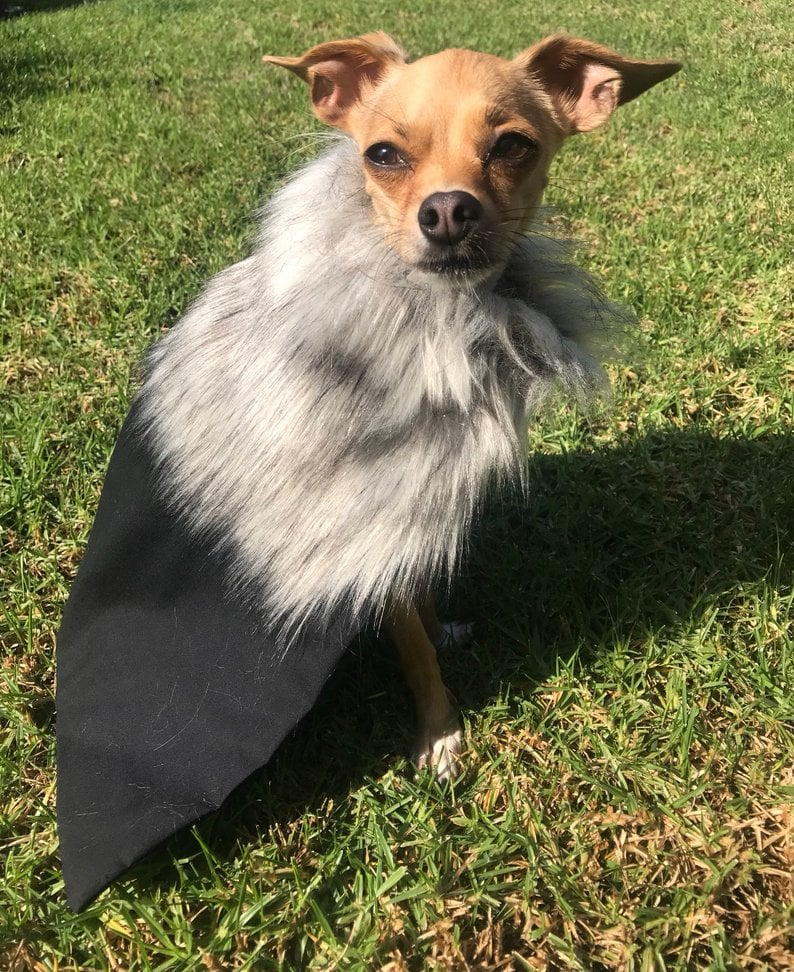 Dress Your Pets Like Jon Snow and Daenerys With These Game of Thrones Pet Cloaks