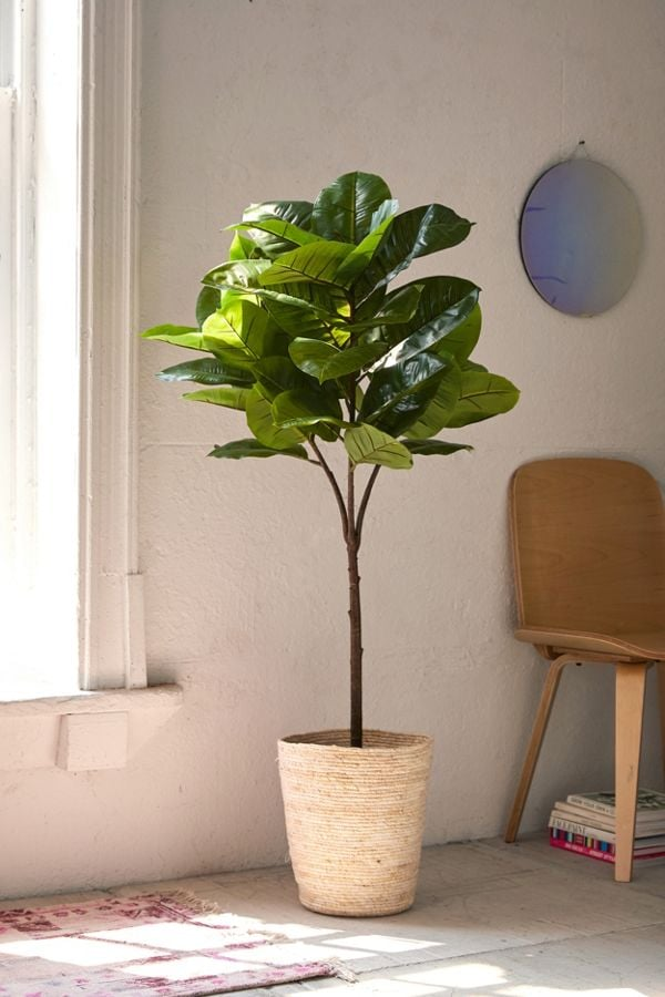 Potted Faux-Rubber Tree