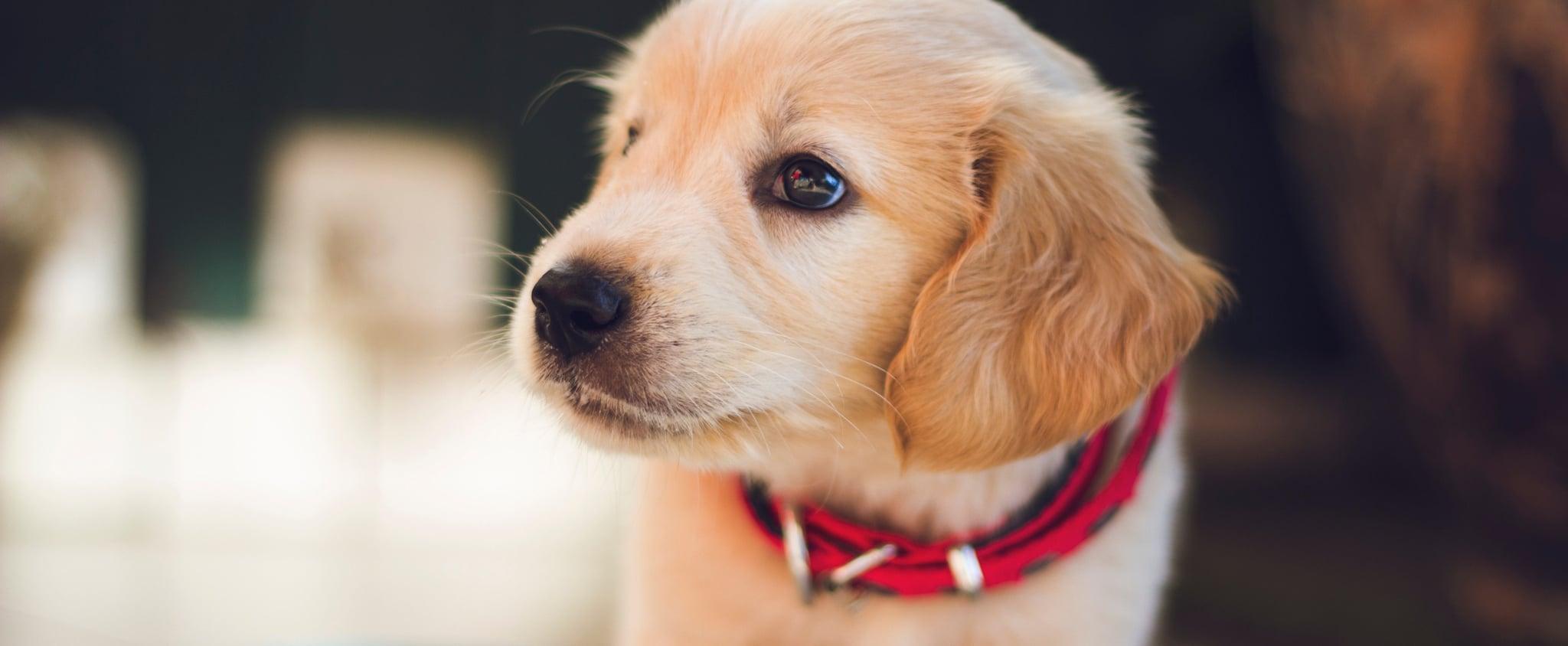Puppy GIFs