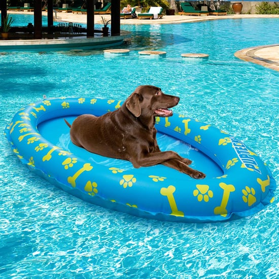 Best Summer Dog Products