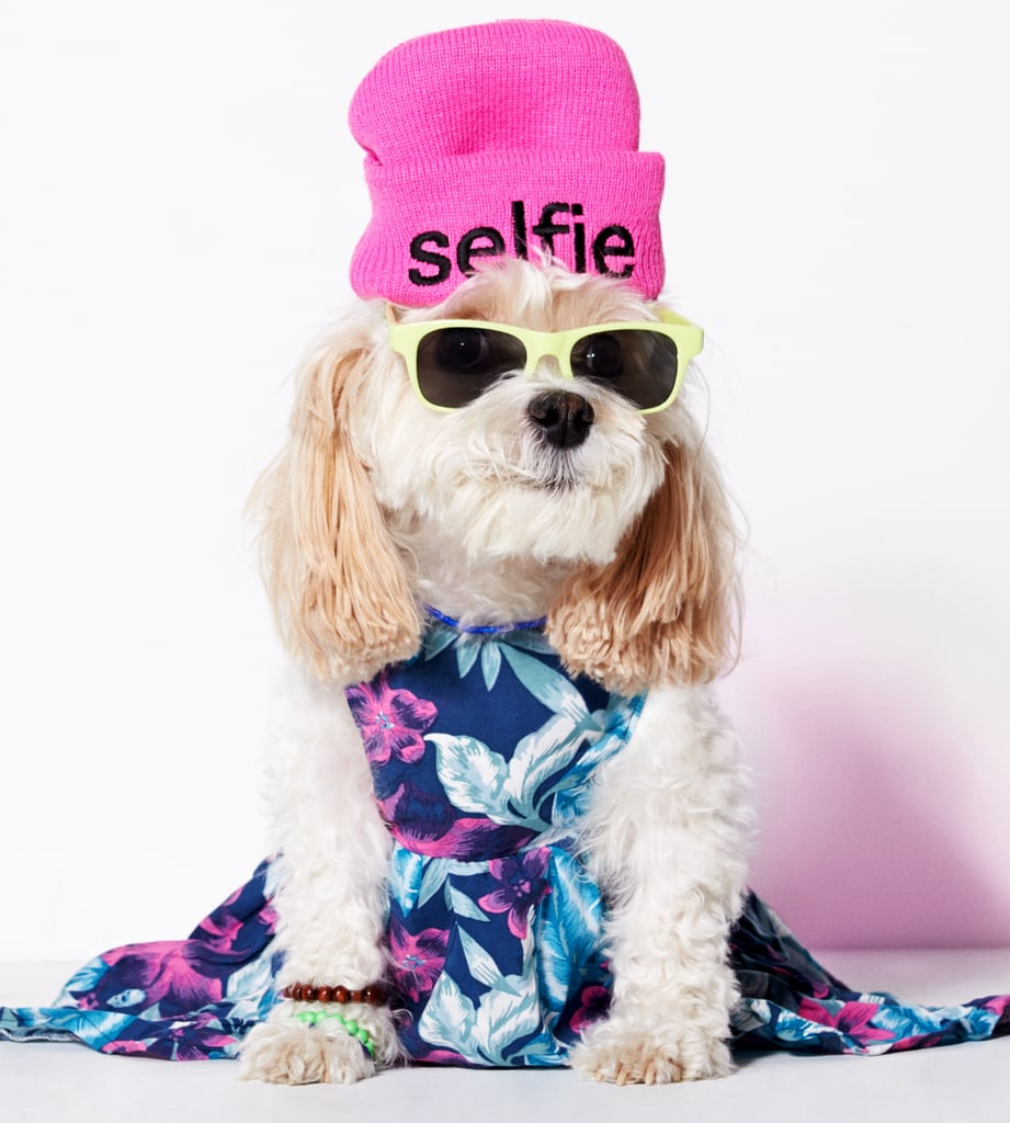 American Eagle Dog Clothes Pictures