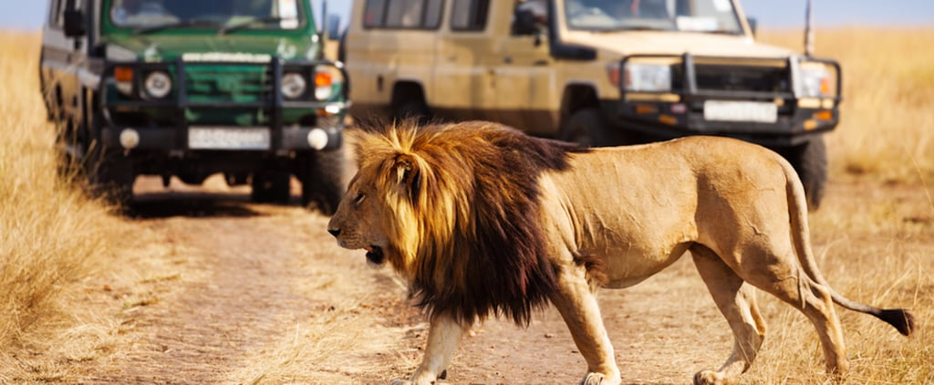 Dubai Safari Will Be Open By National Day