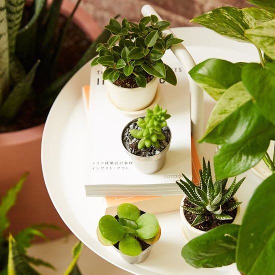 Best Office Desk Plants