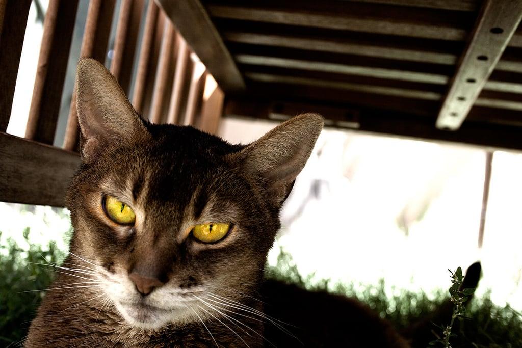 """""""I'm not impressed."""" Source: Flickr user feverblue"""