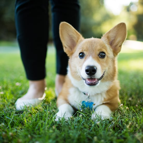 I Worked as a Puppy Trainer, and These are My Top Tips