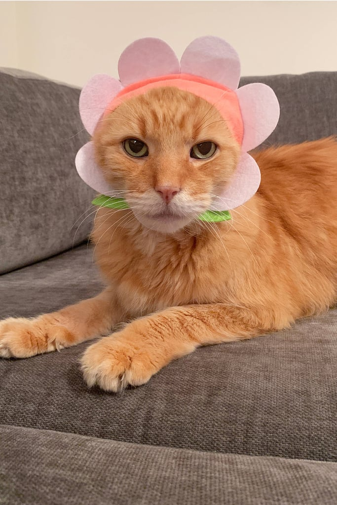 Flower Cat Cap