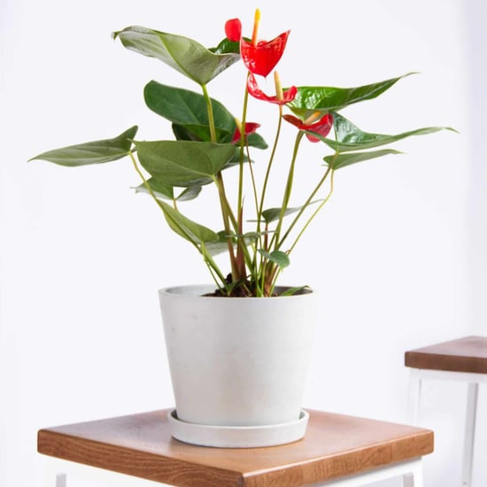 Best Indoor Flower Plants For Beginners