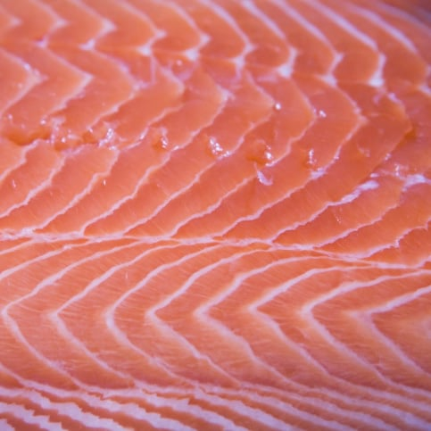 Types of Salmon Species