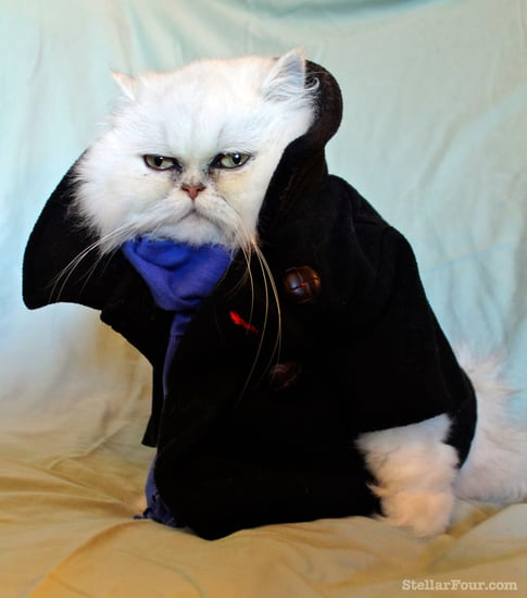 Sherlock Cat Costume