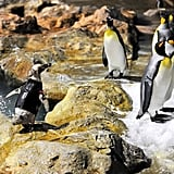 Penguin in a Wetsuit!