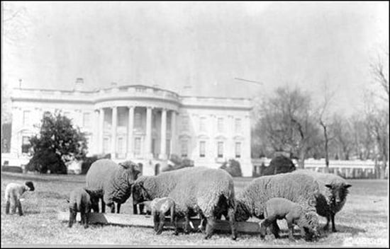 Quiz: Who (Else) Called the White House Home?