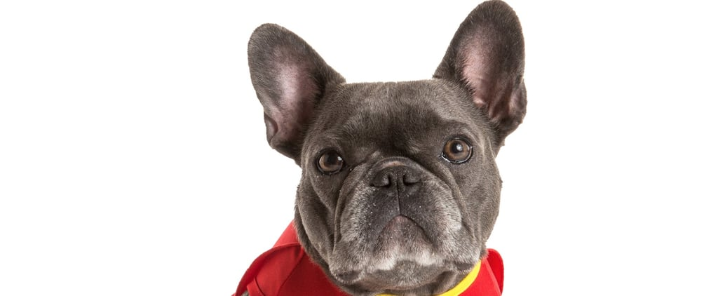 These Are the 10 Most Popular Dog Costumes of 2016