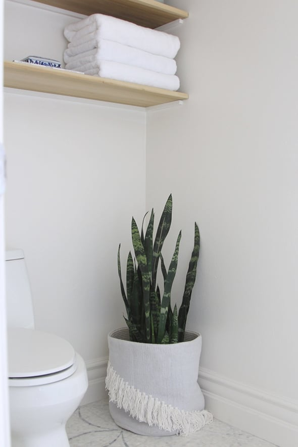 Best Plants For Bathrooms Popsugar Home
