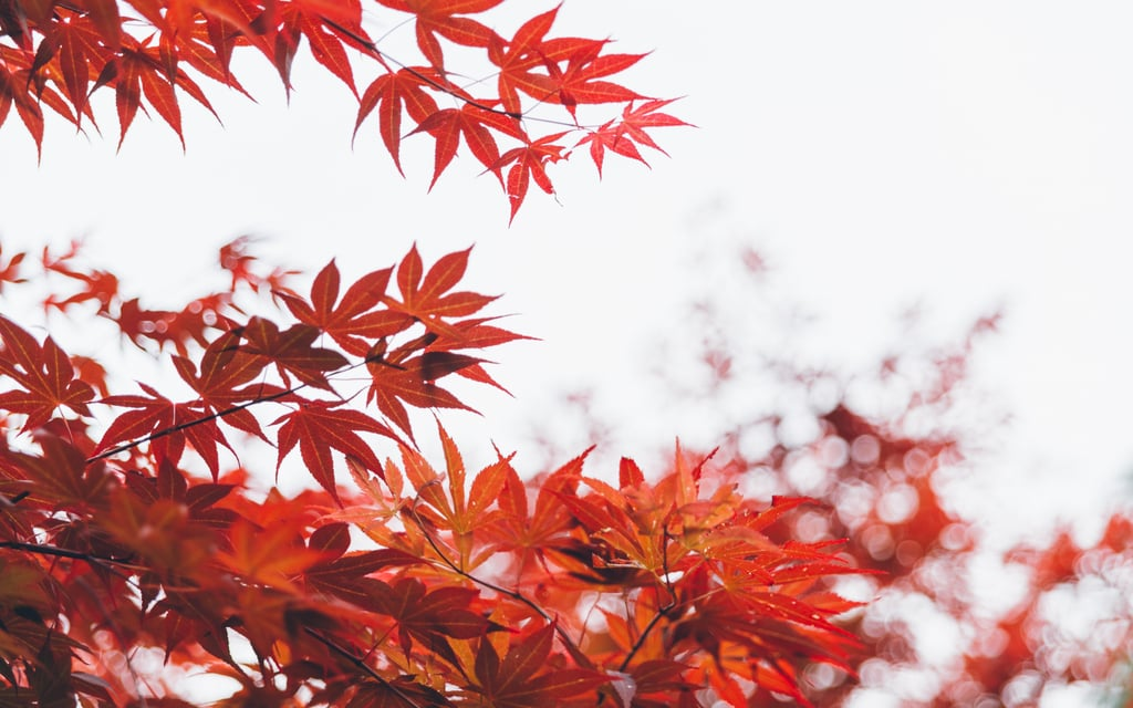 20 Beautiful and Cosy Fall Computer Backgrounds