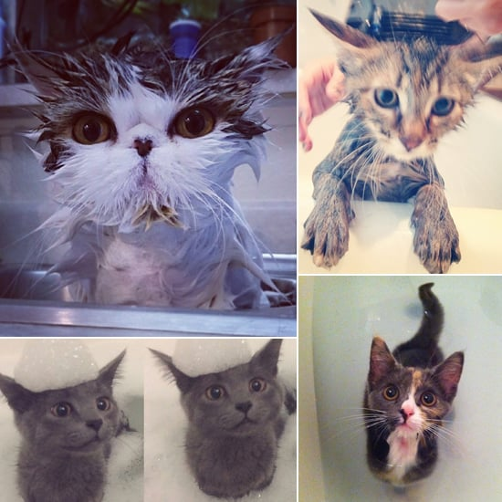 It's Raining Cats! The Cutest Cat-Bathing Pictures From Instagram