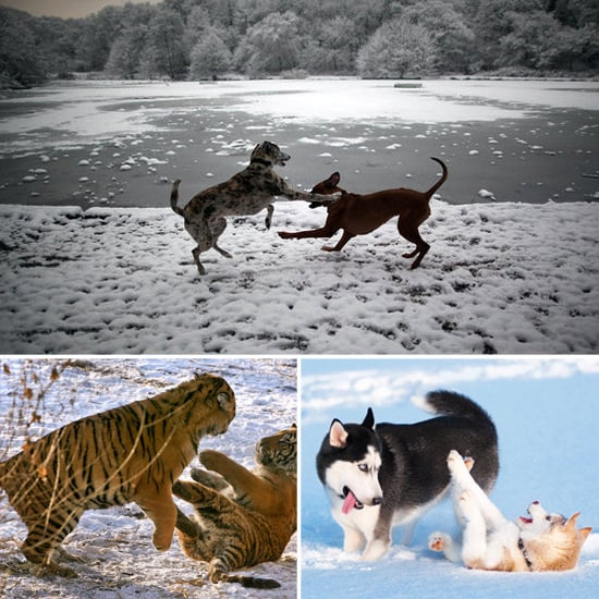Let It Snow! These Pics of Animals Playing Will Warm Your Heart