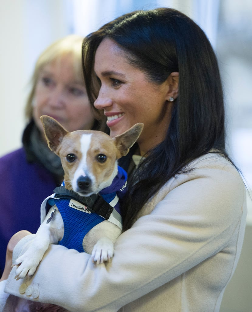 e4b3af0cc703f Meghan Markle Visits Mayhew January 2019 | POPSUGAR Celebrity