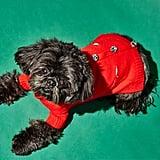 Ware of the Dog Pom Pom Dog Cardigan