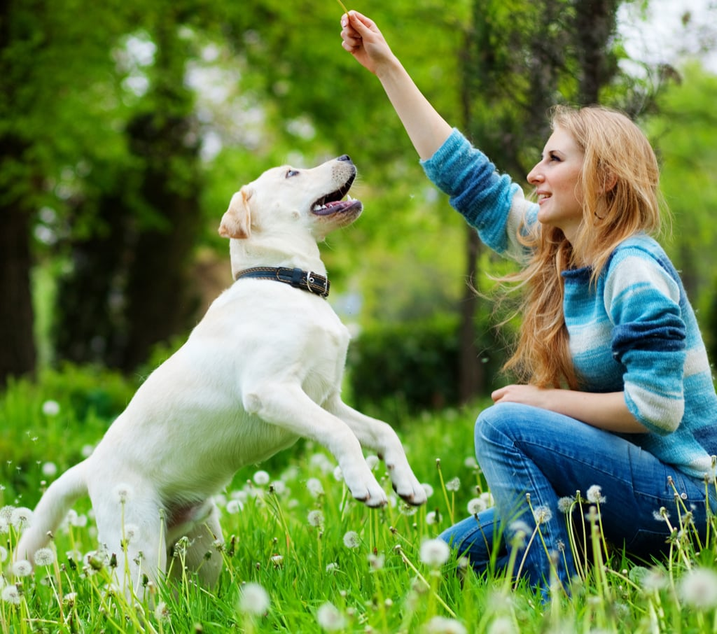 Hands-On Training: 5 Signals to Teach Your Dog