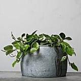Gerard Galvanized Planter ($42)