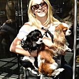Julianne Hough carried her two Cavalier King Charles Spaniels, Lexi and Harvey, into the NYC MTV Studios in June 2012.