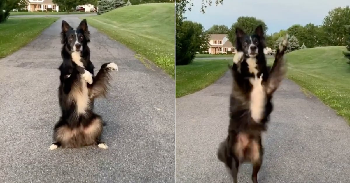 "This Talented Dog Dancing to Taylor Swift's ""Love Story"" Remix Deserves All the Treats"