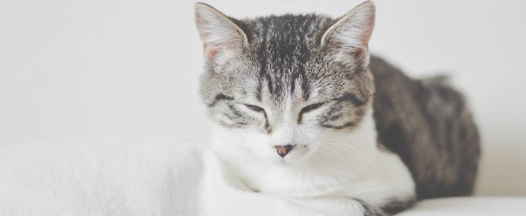 Mind Trip: You Fall Asleep While Awake More Often Than You Think