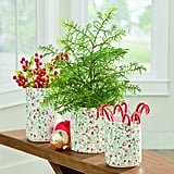 Soft Pine Tree in Pot With Festive Foliage Vases