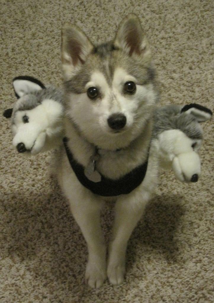 Cerberus Dog Costume Diy Pet Costume Ideas Popsugar Smart