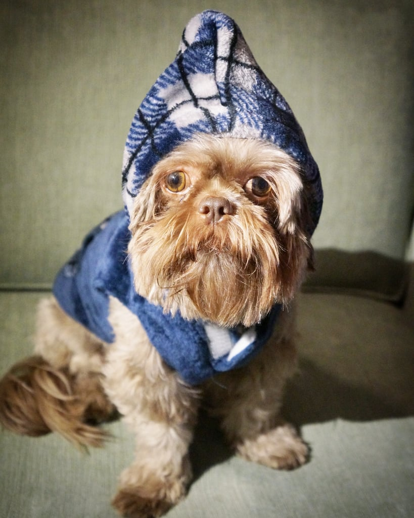 PetSmart Top Paw Plaid Fleece Dog Hoodie