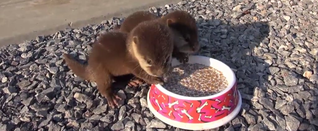 Baby Otters Eating