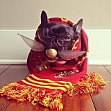 Harry Potter Dog Outfits