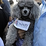 In Florida, this pristine Poodle gives Mitt Romney his stamp of approval.