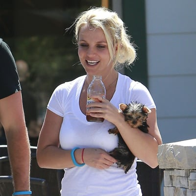 Britney Spears Wears Short Shorts With David Lucado