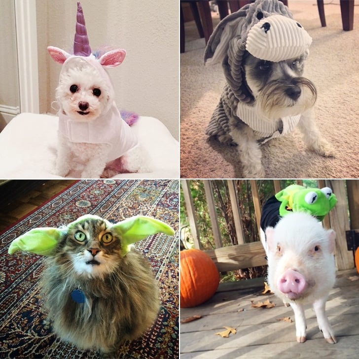 Diy pet costume ideas popsugar smart living diy pet costume ideas solutioingenieria Image collections