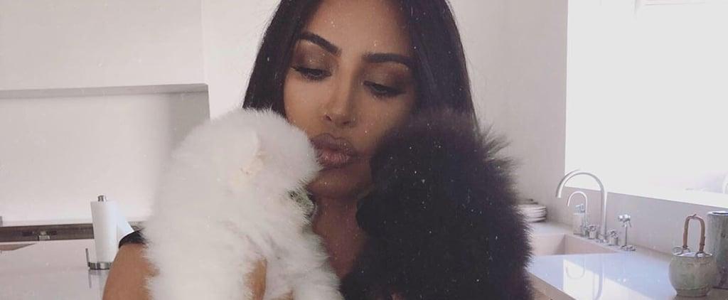 Kim Kardashian Adds 2 Pomeranian Puppies to Her Family