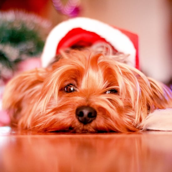 Tips For Getting the Best Pet Holiday Photos