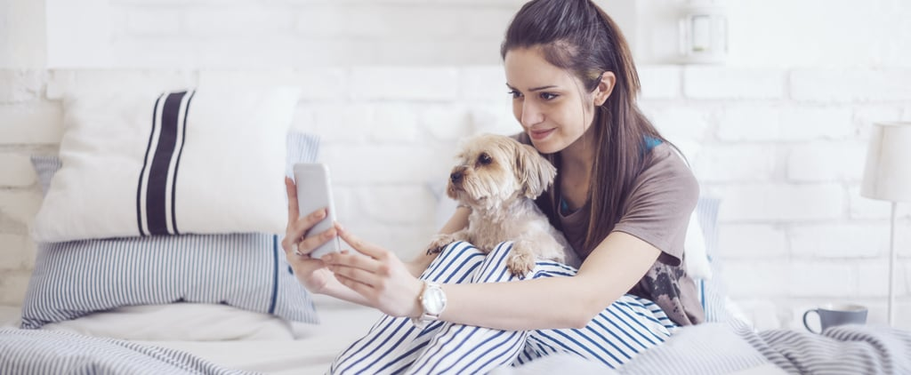 Do Dogs Understand Phone and Video Calls?
