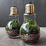 Light Bulb Plant Terraium
