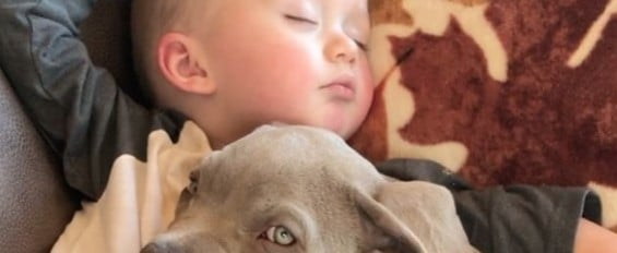 Pit Bull and Baby Safety