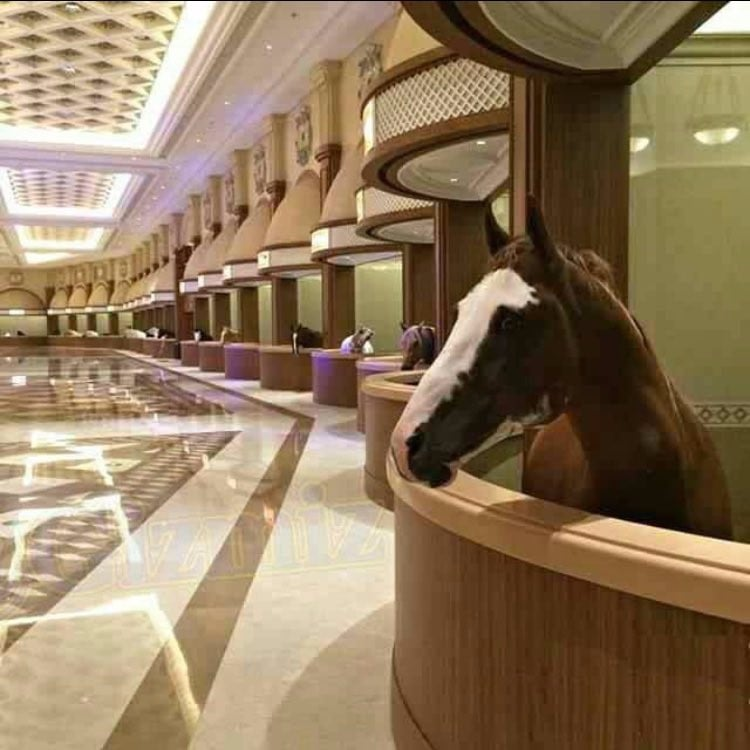 Most Luxurious Horse Stable In Dubai