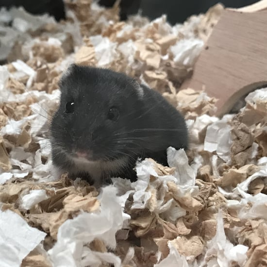 How My Pet Hamster Helps Me Manage My Stress Amid COVID-19