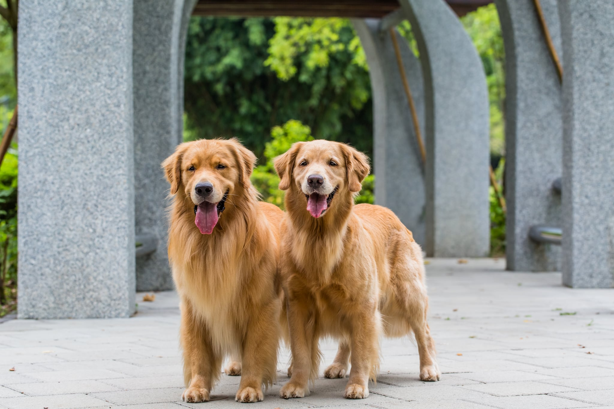American Golden Retriever There Are 3 Varieties Of Golden Retrievers Here S What You Should Know About Them Popsugar Pets Photo 15