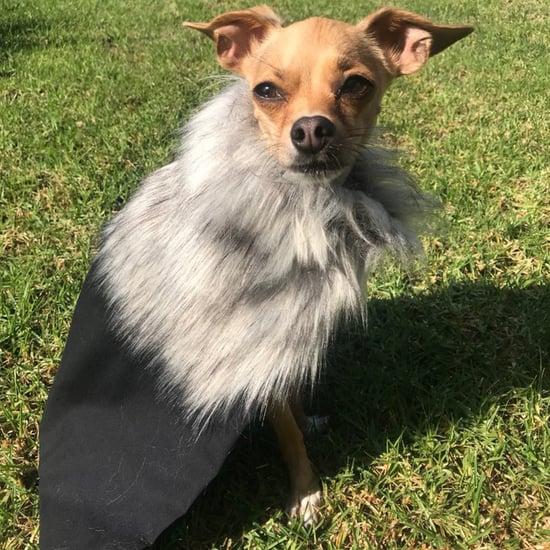Game of Thrones Jon Snow and Daenerys Dog Coats