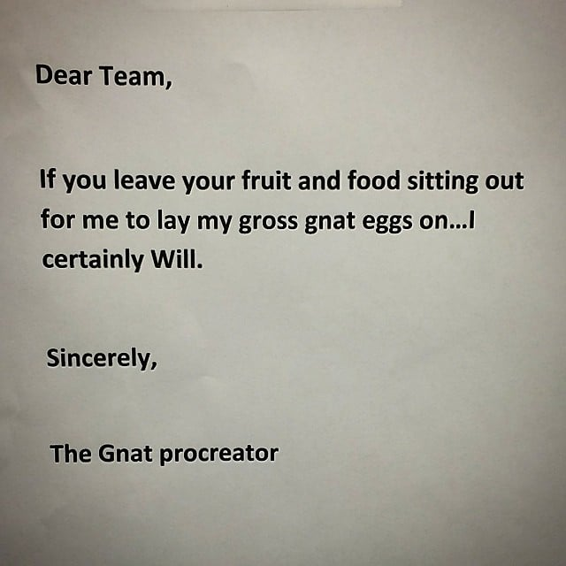 You Know Things Are Serious When the Gnat Procreator Leaves a Note
