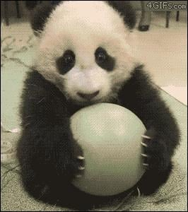 Cute Panda GIFs